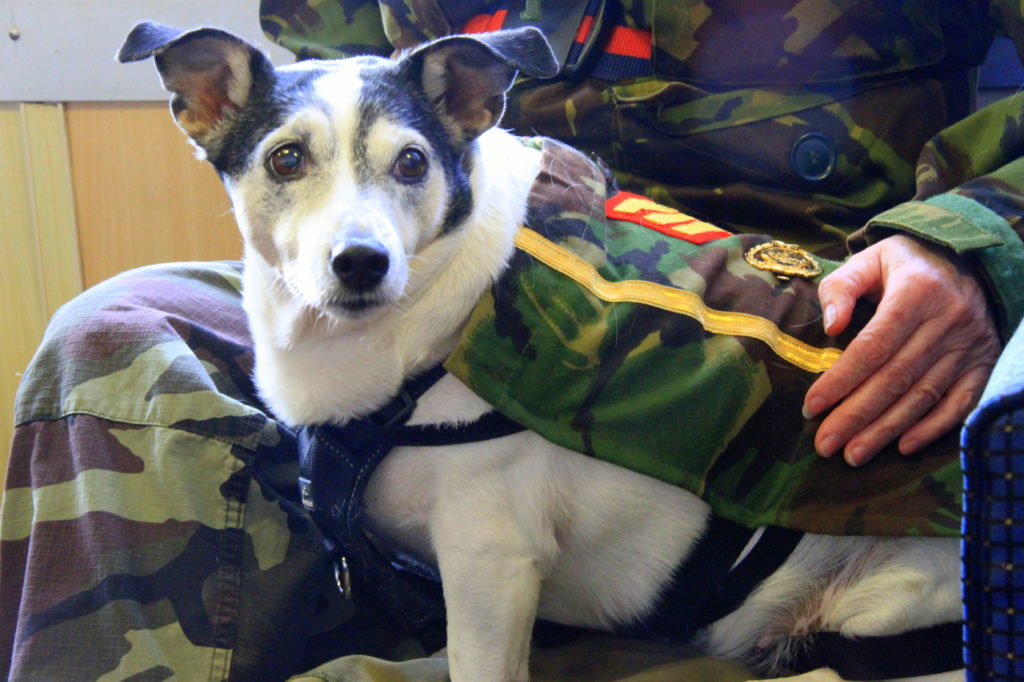 Sgt Millie Clark, promoted last year for services to poppy selling, keeps a close eye on both natioal security and sandwiches. Photograph: Stephanie Cope