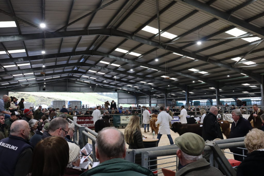 A large crowd surrounded the pens as the show took place on Sunday. DM_t07_HighlandCattleShow