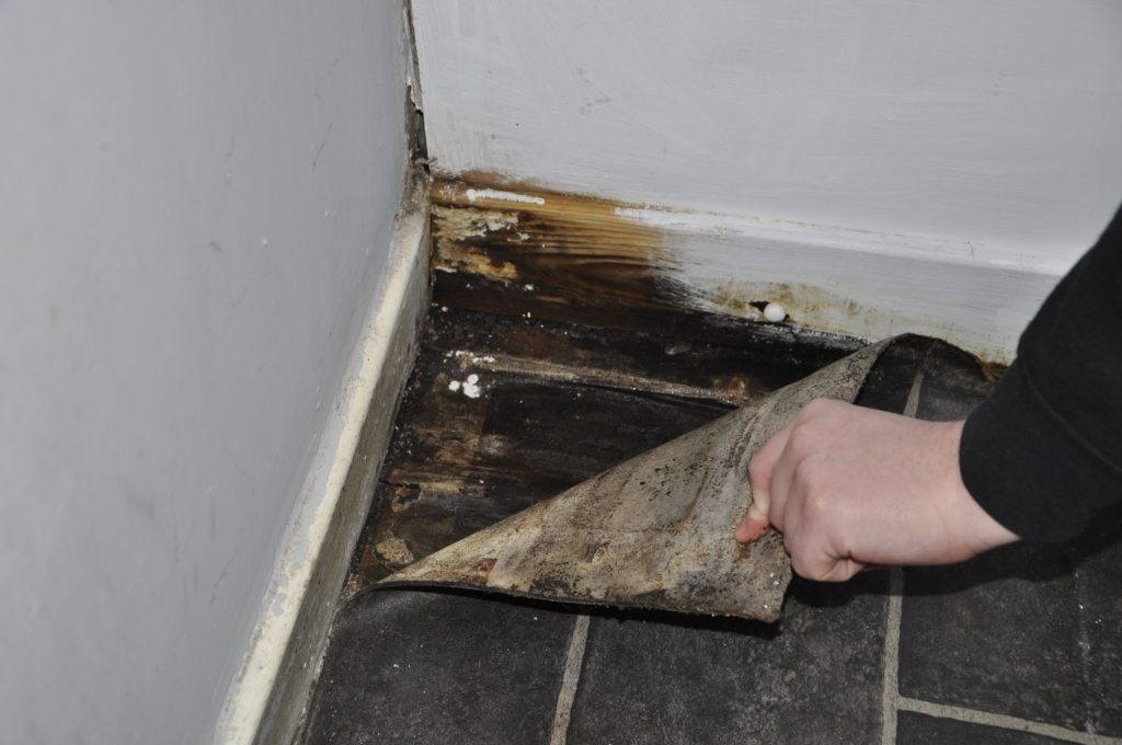 The bathroom floor is rotting and spongy.