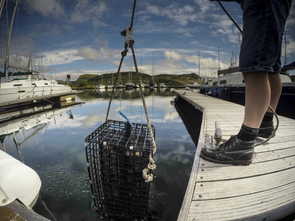 The oysters are lowered into Loch Craignish at Ardfern Yacht Centre. Photograph:  Philip Price/Lochvisions