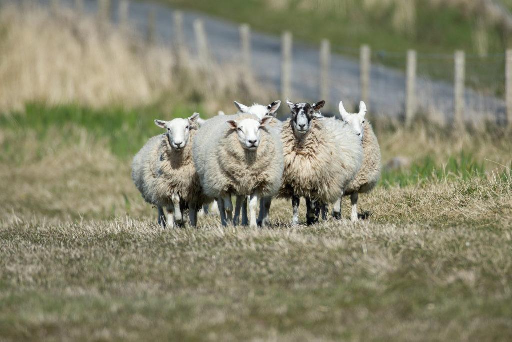Seven make a flock.