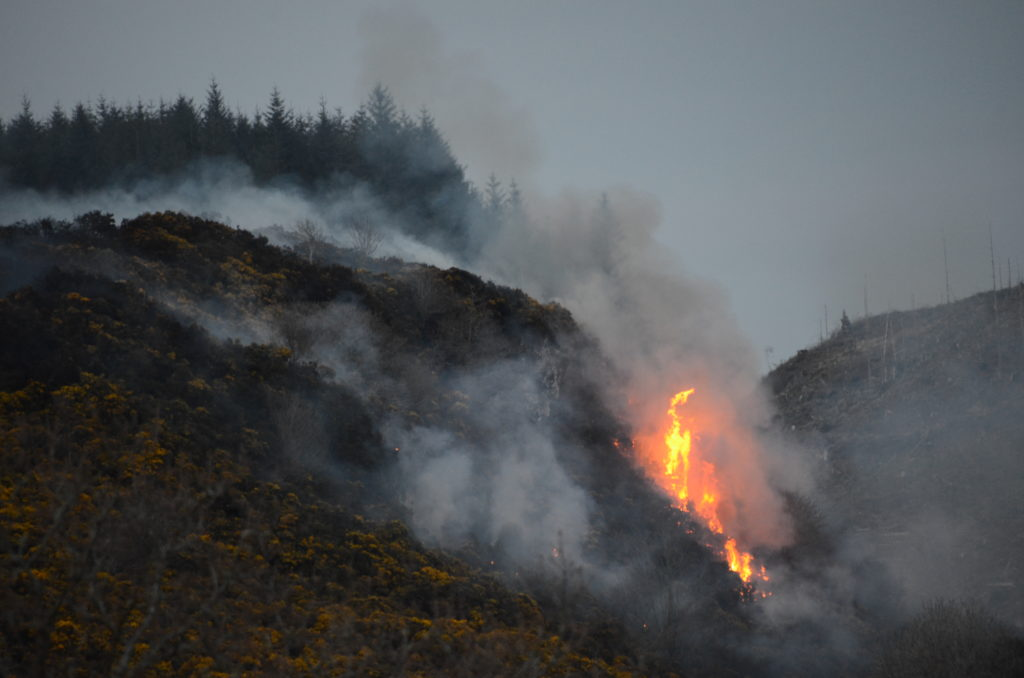 Firefighters worked on for more than 15 hours to bring the wildfire under control. Photograph: Maurice Wilkins.