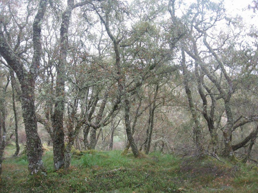 Celtic rainforest full of magic and mystery