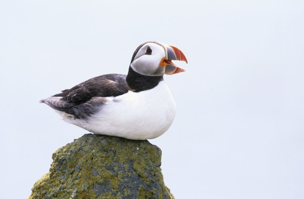 Heritage Lottery Fund award to help save puffins