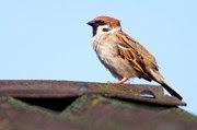 Public urged to avoid birds nests when gardening or building