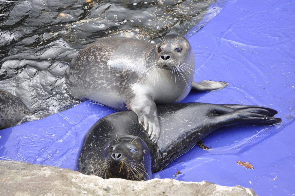 Pupils launch petition to save Sealife Sanctuary