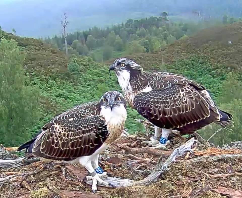 WATCH: Loch Arkaig Ospreys season summary