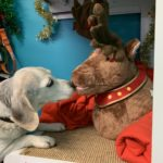 NO F01 Christmas vet story 01