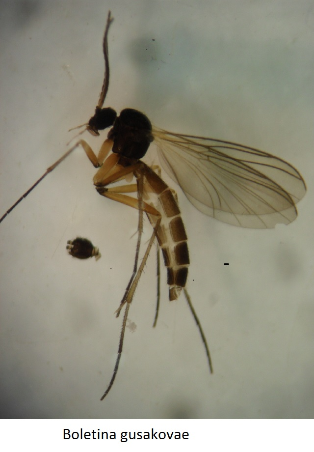 Gnats a first! Rare insect finds at Loch Arkaig flabbergast naturalists