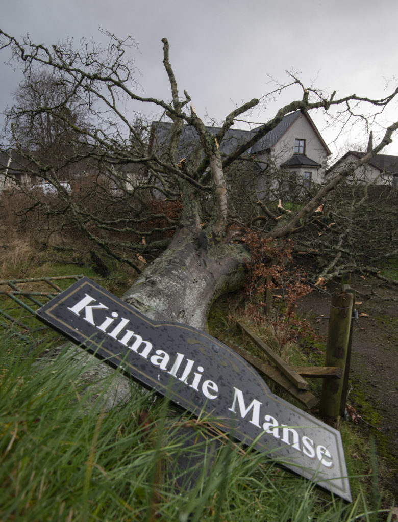 Ancient Corpach beech that stood test of time falls victim to Storm Dennis