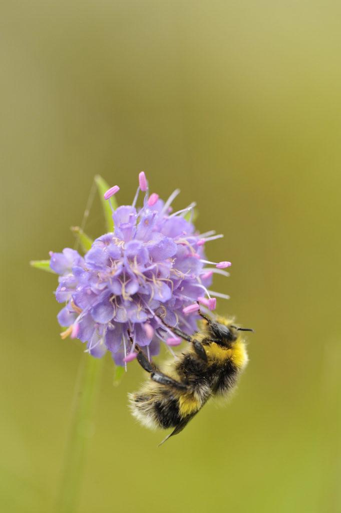 Praise for partners helping Scotland's pollinators thrive