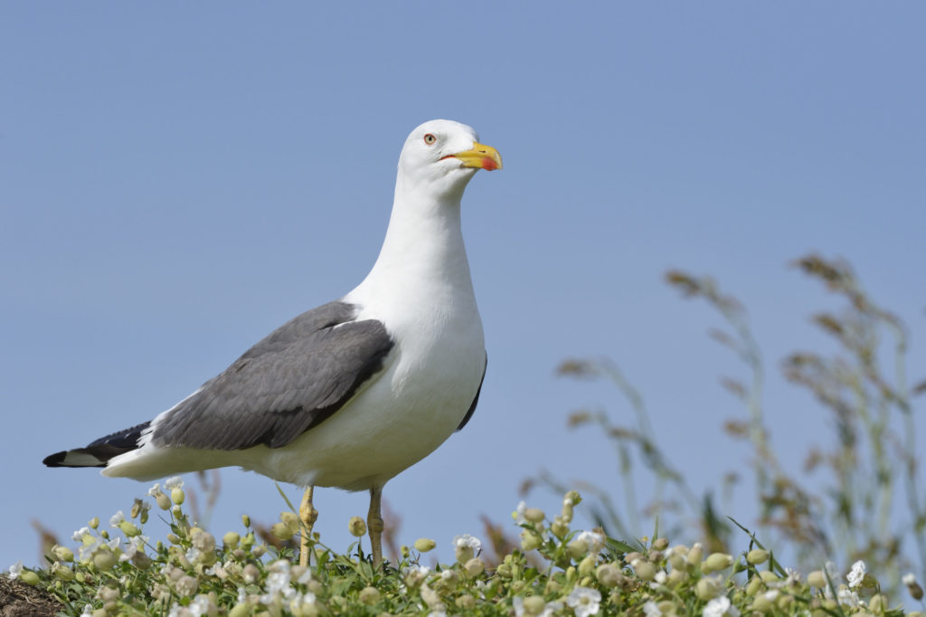 Renewed General Licence brings greater protection for birds