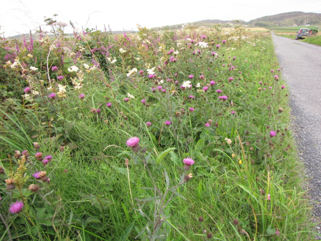Councillor Niall McLean says creating a more biodiversity landscape with long grass and wild flowers is preferable to grass cutting in many areas. NO_T49_Islay verges