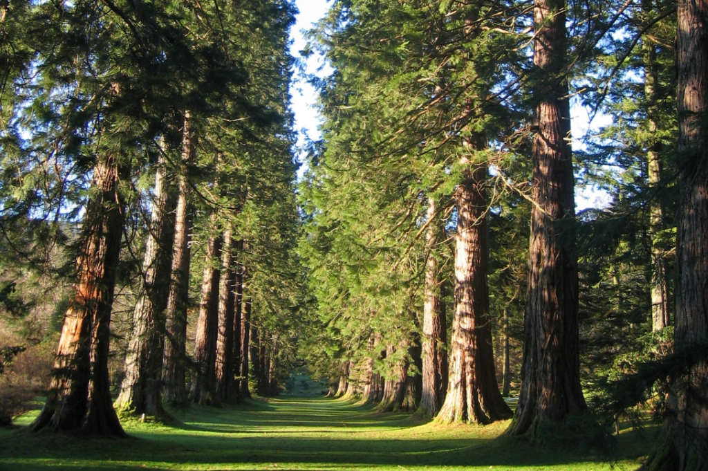 Botanic garden set for safe reopening