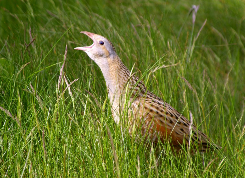 Our fast disappearing wildlife