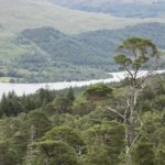 View east from hill above Loch Arkaig, Scotland. NO-F18-Loch-Arkaig-Pine-Forest-2-Credit-John-MacPherson-scaled.jpg