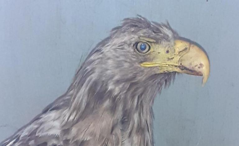 NO F35 sea eagle