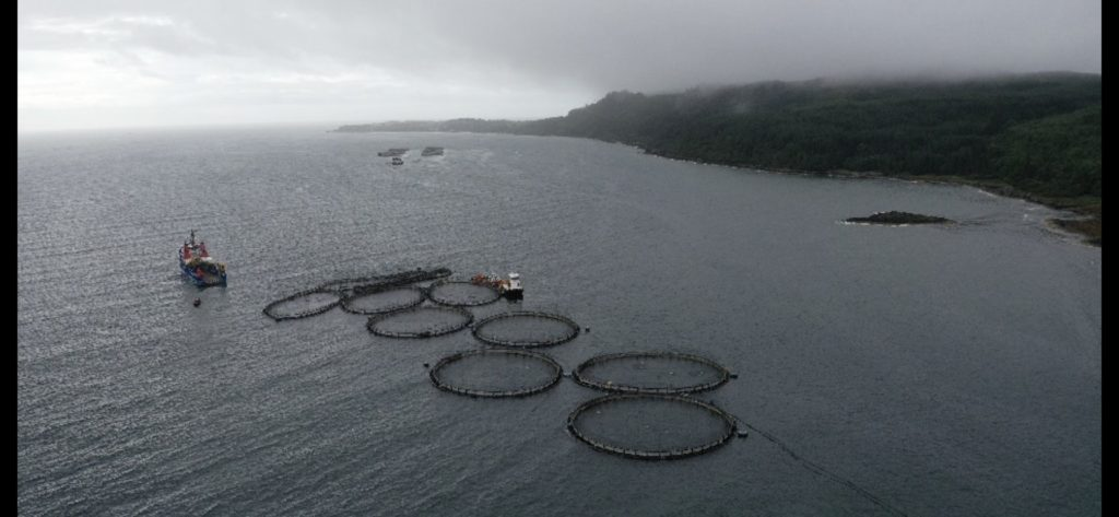 UPDATE: Fears for wild Scottish salmon after storm dislodges fish farm