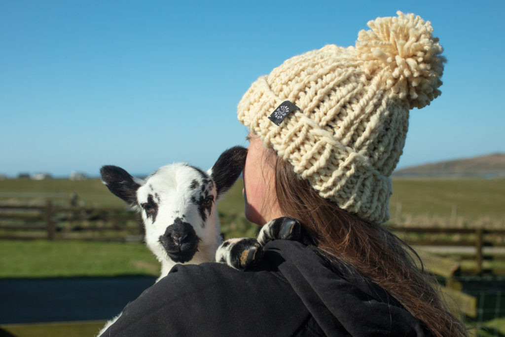 Meet the flockers – and their woolly family
