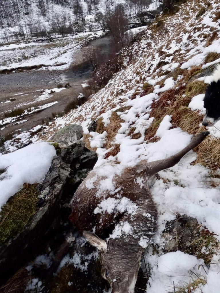 Charity refutes claim of careless deer management