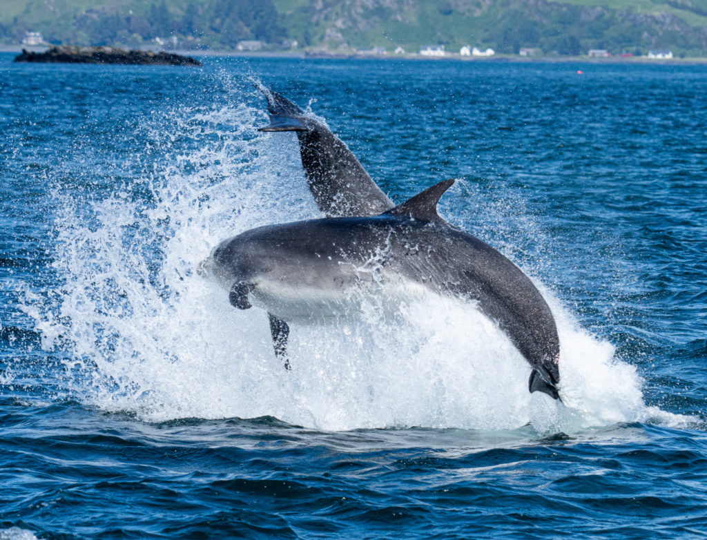 Dolphin protection petition helps win fish farms' U-turn