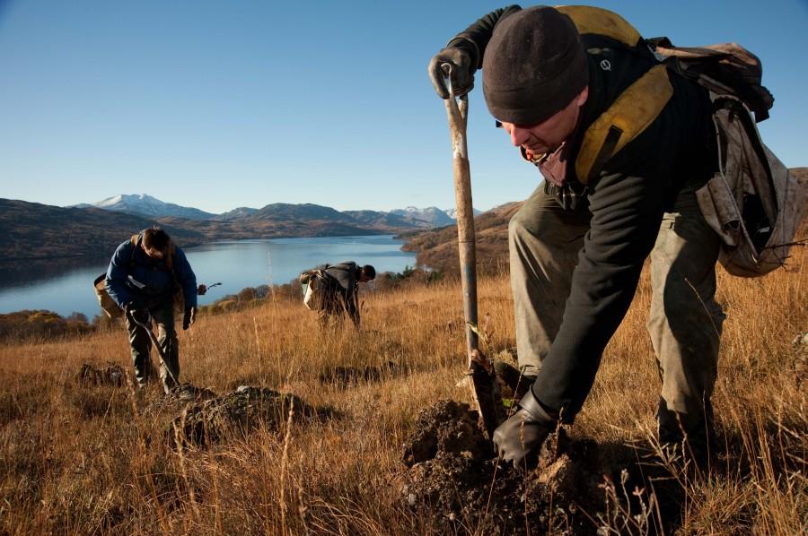 Record tree planting year
