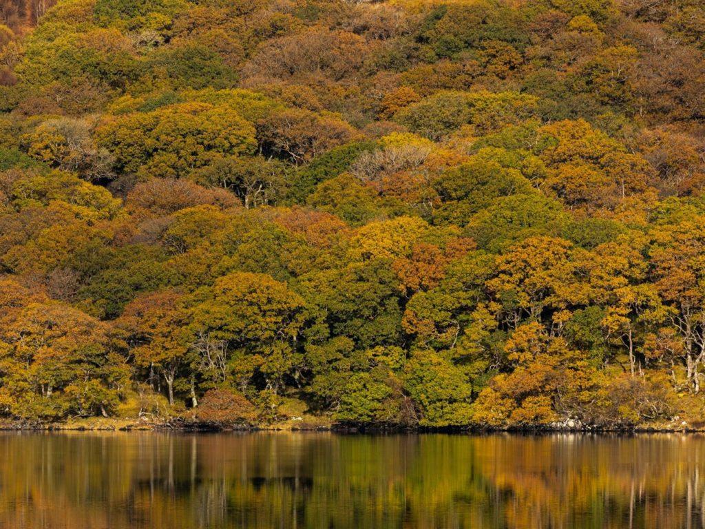 Critical Scottish Rainforest restoration project one step closer