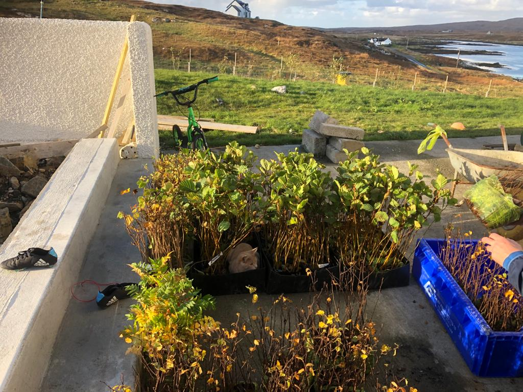 Western Isles Croft Woodland project passes the 100,000 tree mark