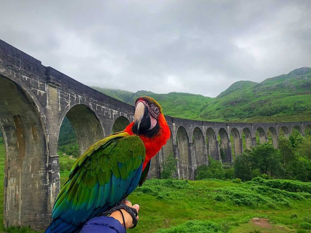 Motley the macaw takes in the sights on his recent visit to Glenfinnan. NO F32 Motley the Macaw