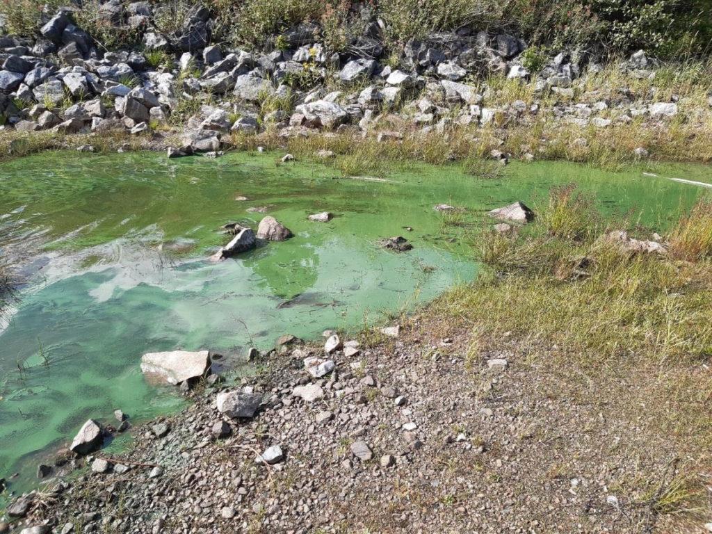 Algal scum on the water at Laggan Locks this week. NO F35 Loch Lochy