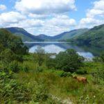NO F37 Highland Cows at Loch Katrine