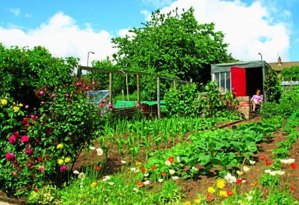 John's City Road Plot, garden with flowers