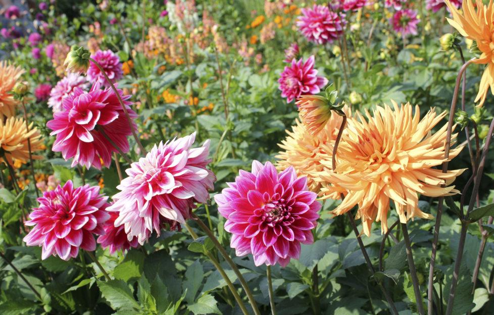sea of flowers in the summer. September garden checklist