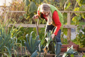 allotments advice