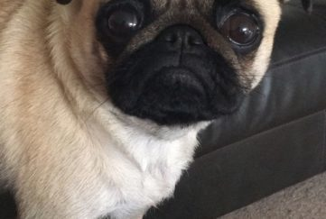 the people's friend garden