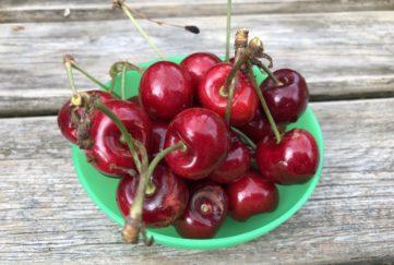 Writing Prompt: Cherries