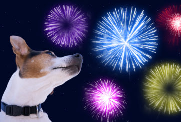 bonfire night pet tips