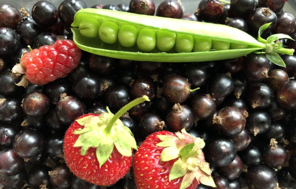 Writing prompt mixed fruit