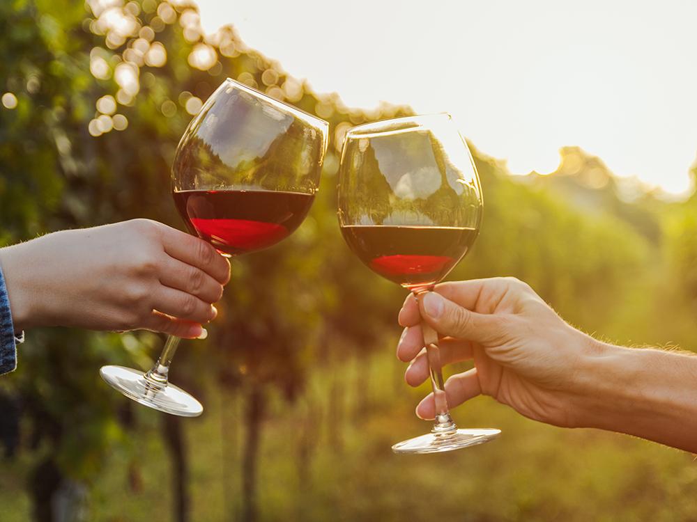 Enjoy wine in a boozy break in the UK vineyards