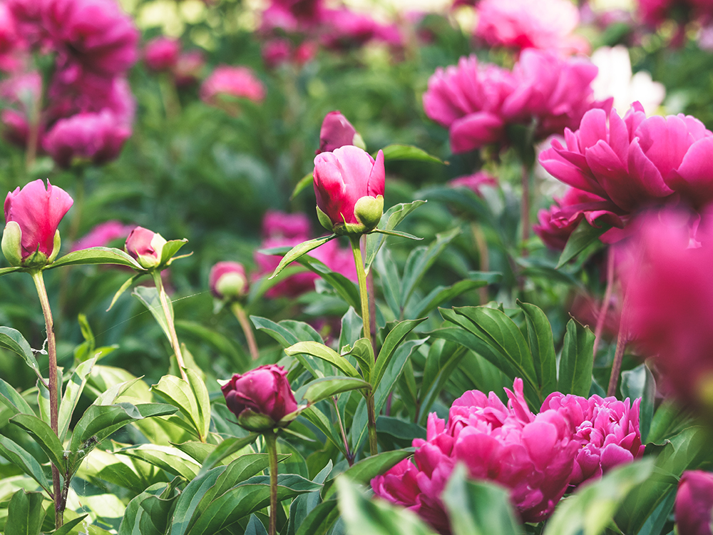 Monty Don recommends playing with colour - don't let it scare you!