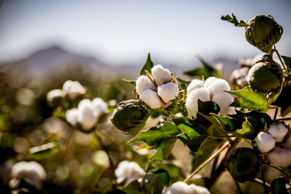 Organically grown cotton is good for the environment and for your sleep