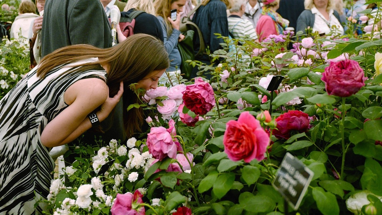 People walk around the David Austin Rose Garden at the RHS Chelsea Flower Show, at the Royal Hospital in Chelsea