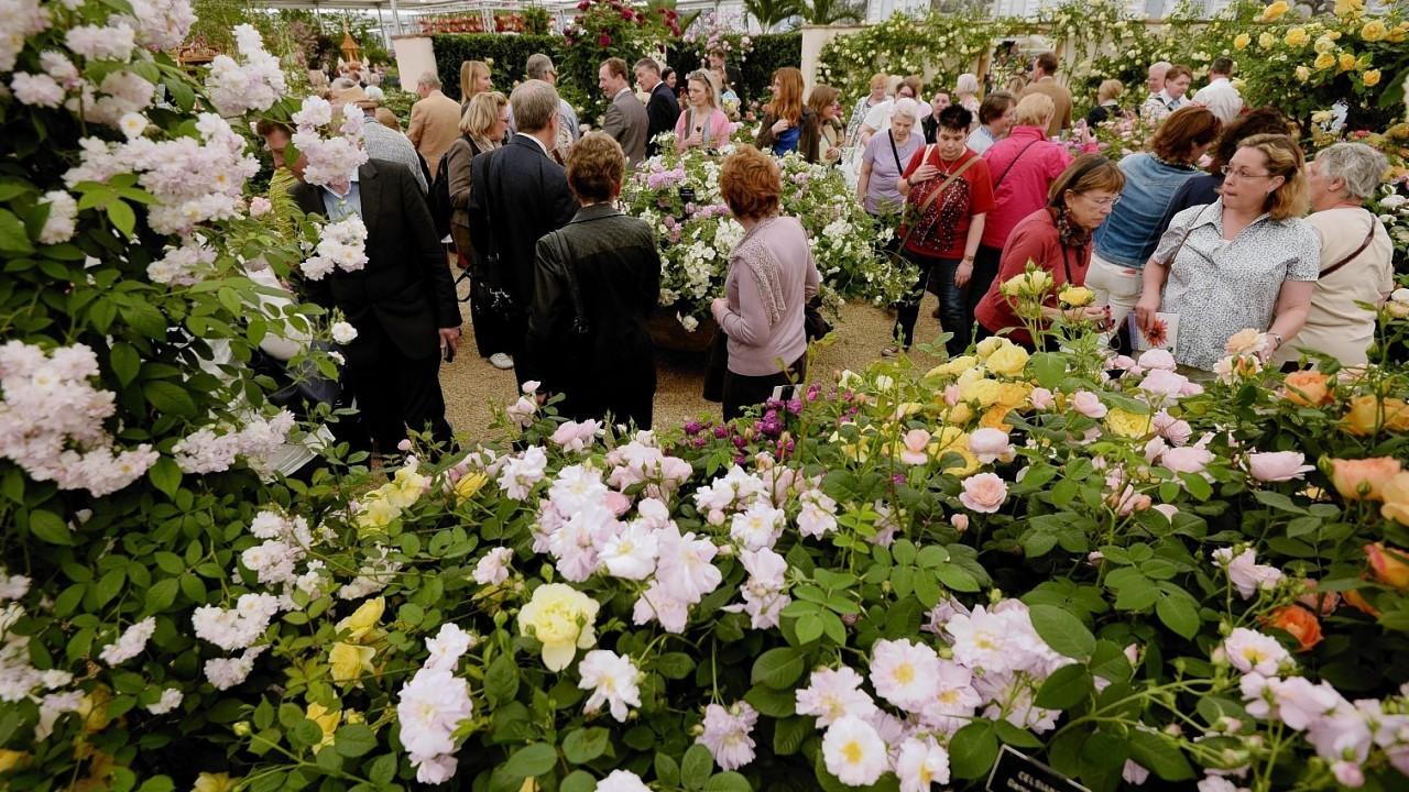 People walk around the David Austin Rose Garden at the RHS Chelsea Flower Show