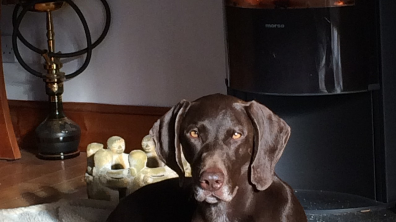 Dita the German shorthaired pointer lives with Liz Marchant at Glen Tanar