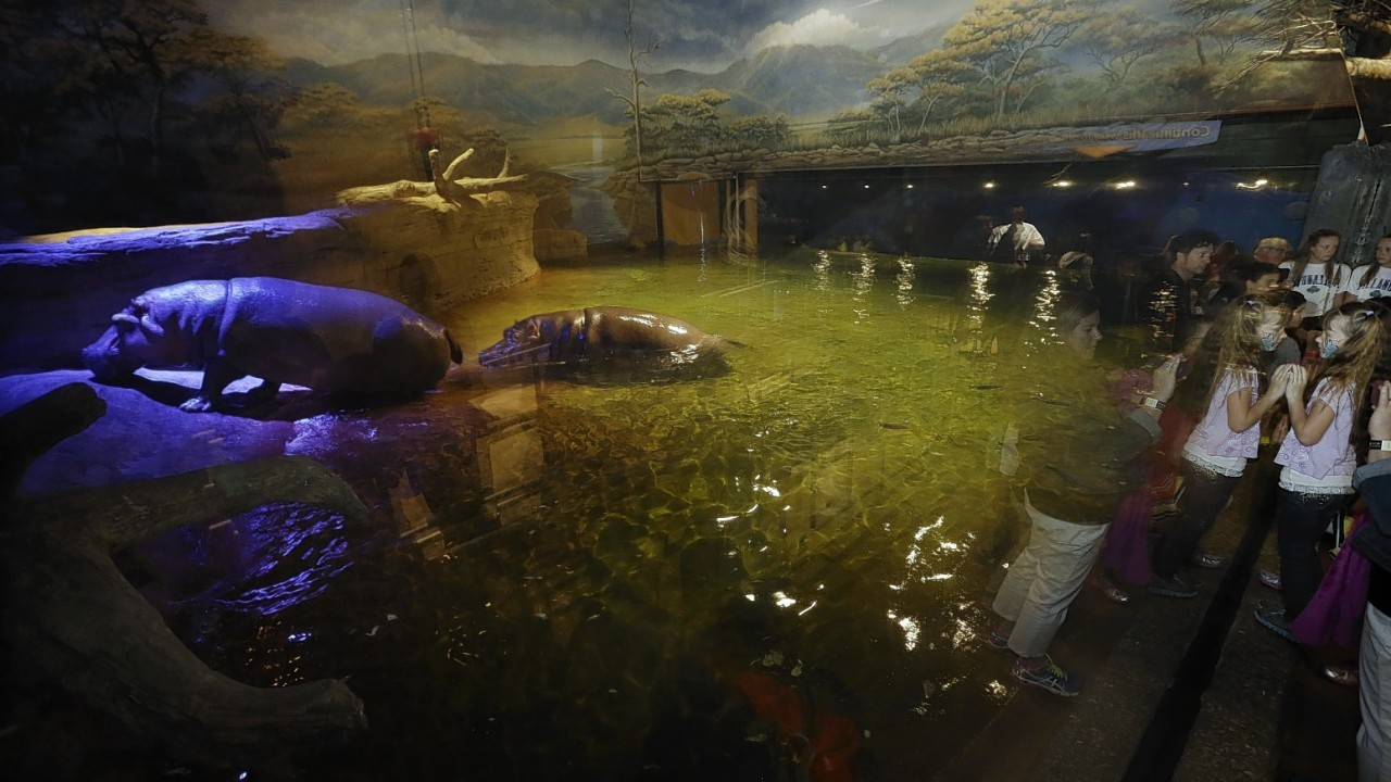 """People watch as a hippopotamus, named Genny, looks back at them at Adventure Aquarium, Thursday, May 29, 2014, in Camden, N.J. New Jersey's Adventure Aquarium has a new home for its two Nile hippopotamuses, Genny is 4,000 pounds and Button is 3,000 pounds. They now live in a hippopotamus exhibit, """"Hippo Haven."""" The aquarium spent more than $1 million to renovate the hippos' home"""