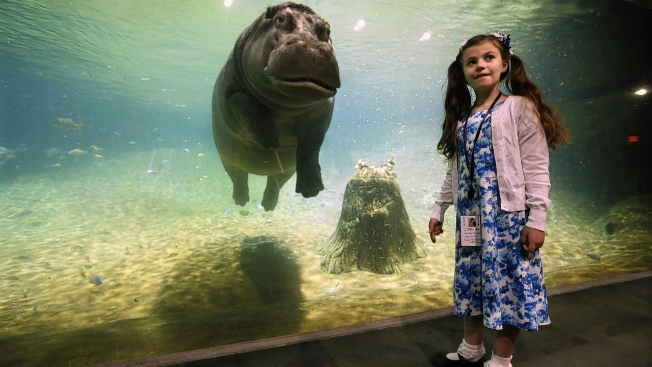 Nine-year-old Audrey Bruben, of South River, N.J., gets a look from Genny, a 4,000 pound hippopotamus, as Adventure Aquarium opened a hippopotamus exhibit, 'Hippo Haven.'