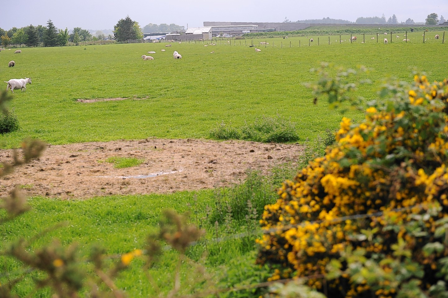 The site of the proposed development at Leanach