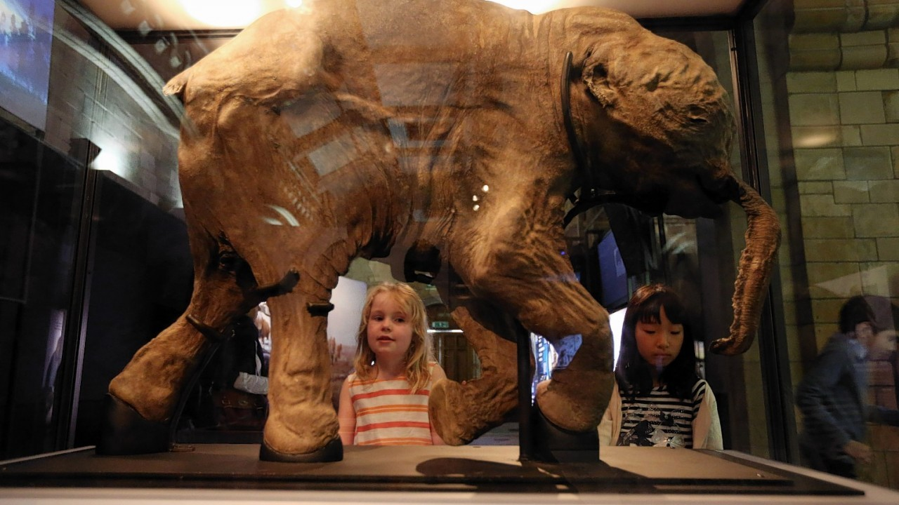 Ingrid Verwoerd, seven (left), and Mao Ishiguro, eight (right), look at Lyuba, a  mummified baby mammoth in the Mammoths: Ice Age Giants exhibition at the National History Museum in central London