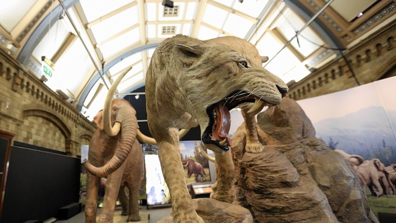 The Mammoths: Ice Age Giants exhibition at the National History Museum in central London