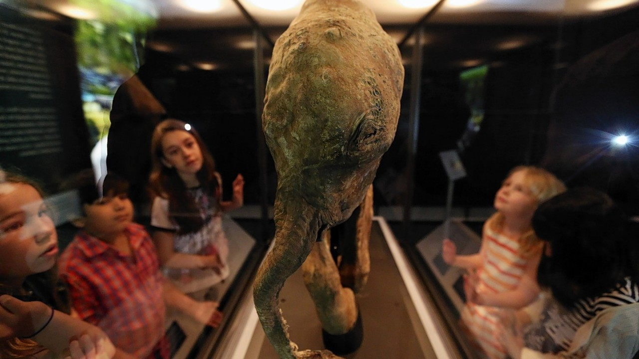 Children look at an Lyuba Woolly Mammoth in the Mammoths: Ice Age Giants exhibition at the National History Museum in central London